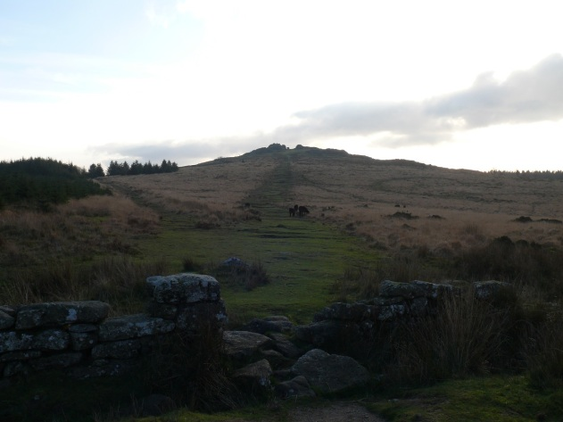 Bellever Tor from the boundary wall