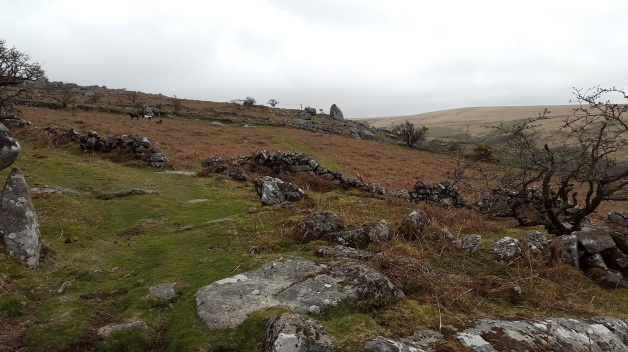 Looking back to Cuckoo Rock from one of the paths to Burrator