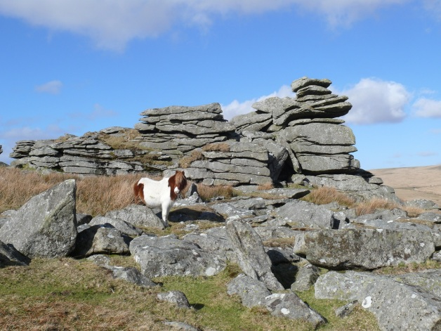 Leeden Tor stack and a Dartmoor pony
