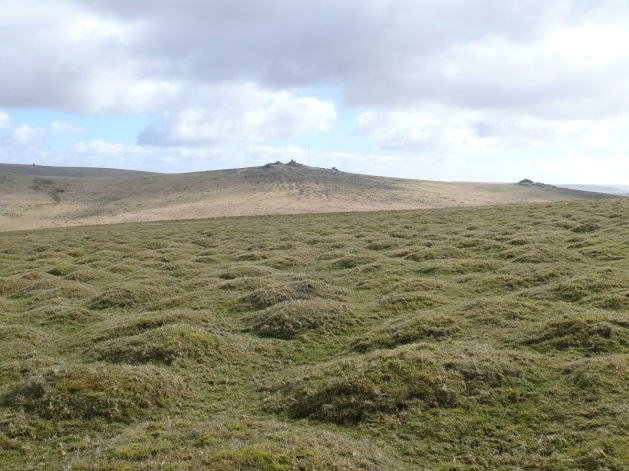 Over the bumps to Great Staple Tor left and Middle Staple Tor right.