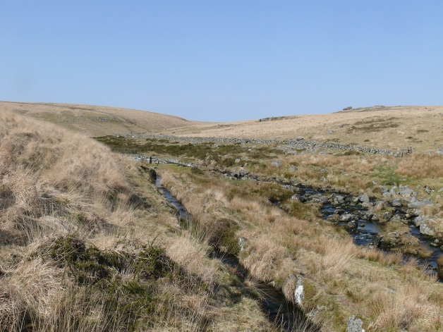 Devonport leat as it splits from the West Dart