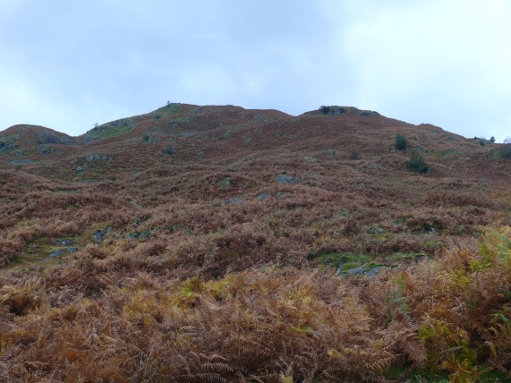 Typical blue skies across the brown bracken