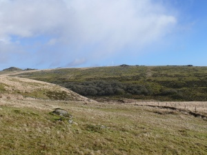 Heading up to Beardown Tor looking across Wistman's Wood to Liitaford Tor with Longaford Tor on the left
