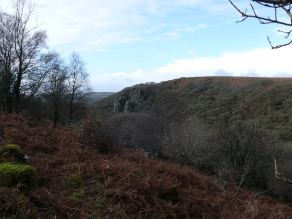 The Dewerstone as we exit North Wood