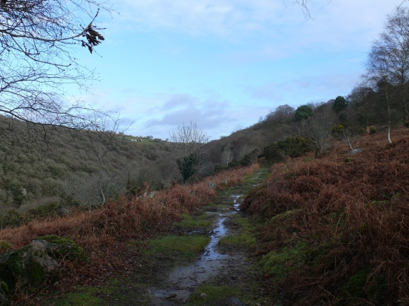 Looking back at North Wood, the Plym valley to the left