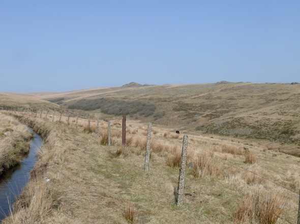 Looking from the leat across to Wistman's Wood below Longaford Tor
