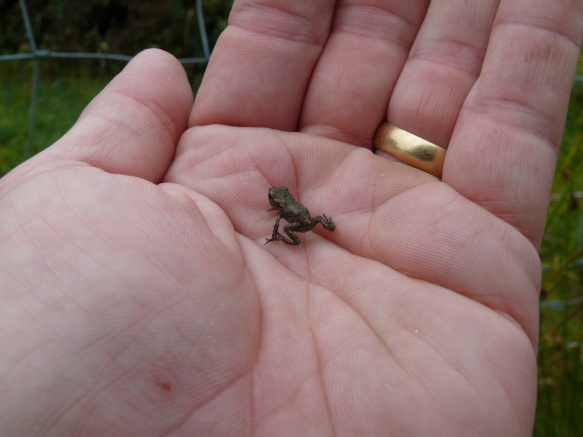 Lots of these little fellas on the path back down