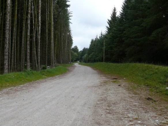 And ahead through conifer plantation