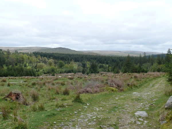 Climbing on out the woods gives good views to Down Tor