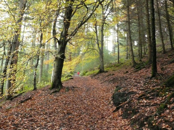 Autumn in Dodd Wood