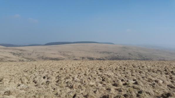 On Winney's Down looking across to Fernworthy Forest