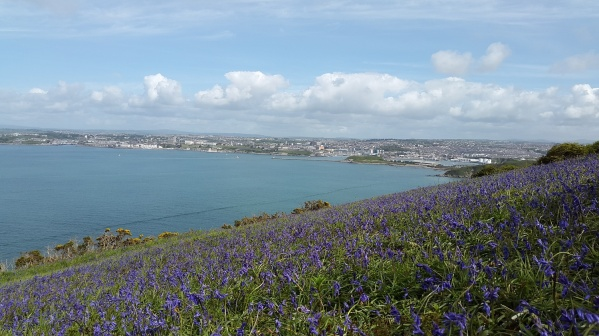 Lovely field of bluebells and Plymouth seafront