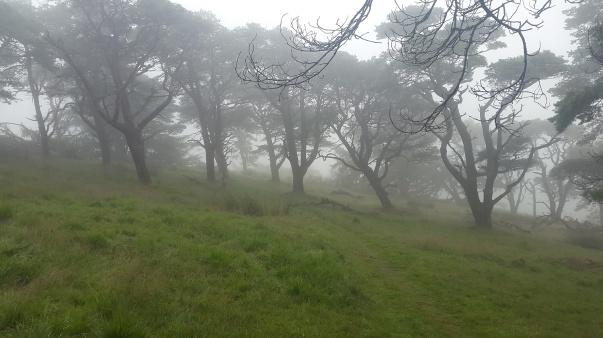 Spooky trees again