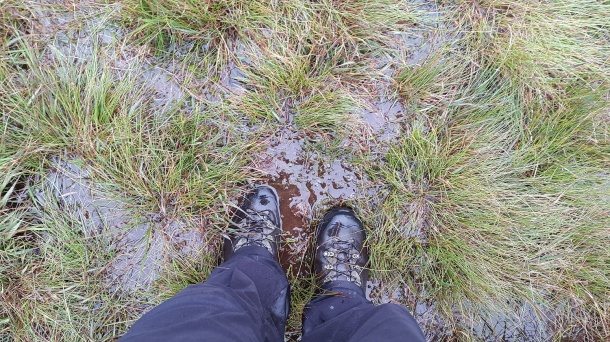Boggy!