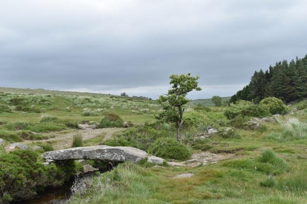 Buttern Hill 15