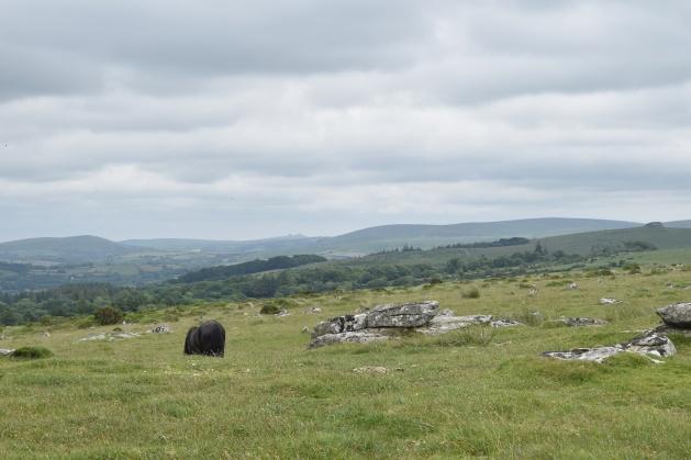 Buttern Hill 20