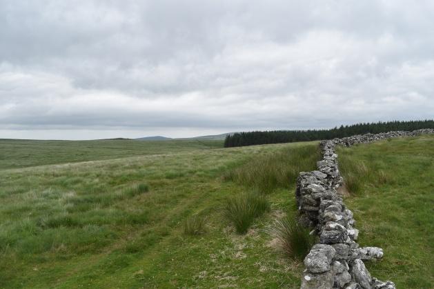 Buttern Hill 9