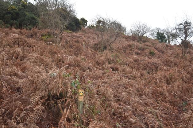 moretonhampstead-and-meldon-hill-9
