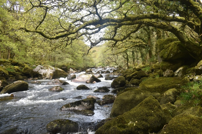 Dartmeet 5