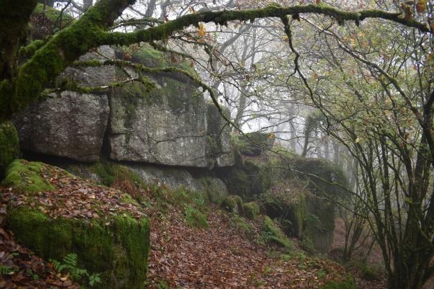 Logwell Rock 5